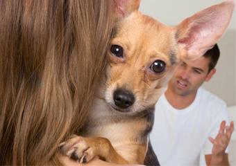 O casal separou-se e agora? Quem fica com o cão?